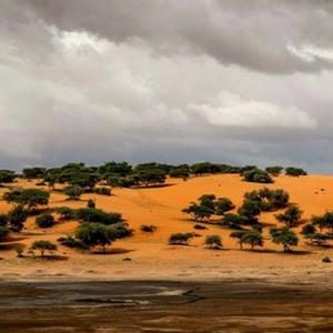 Mauritânia - Sahara