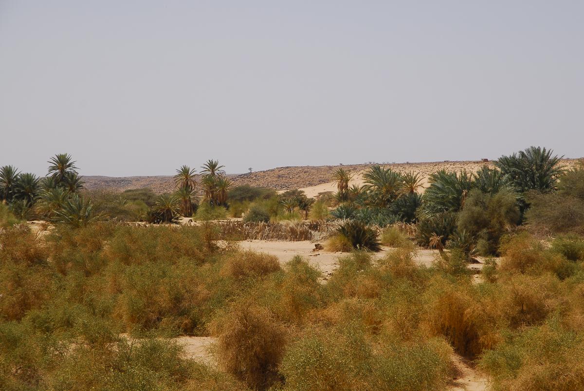 Mauritânia um dos oásis de Ouadane